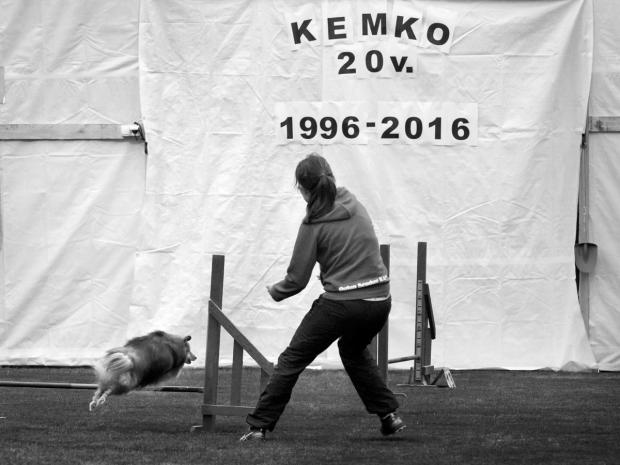 Kemin koiraharrastajat ry 20-vuotisjuhlat. Kuva Taru Mäkimartti.